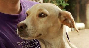 Click to watch Rescuing Rico